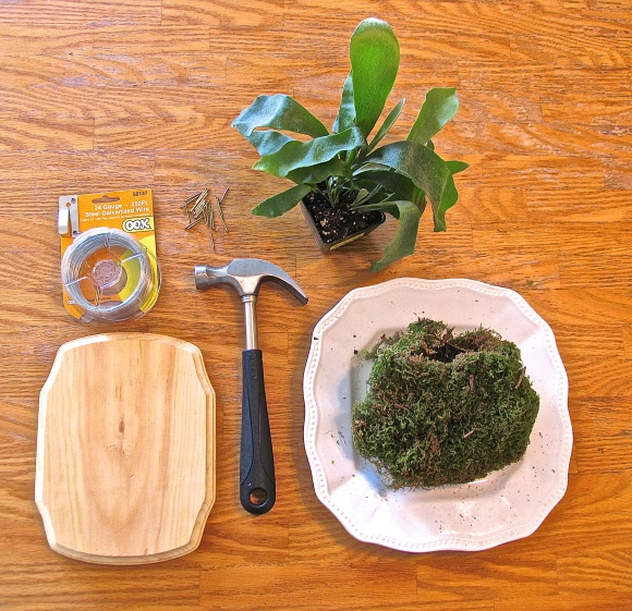 Materials for Staghorn Fern  Tutorial