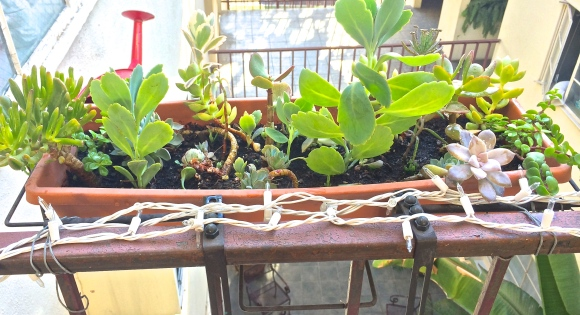 Succulent Planter #1