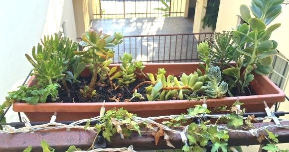 Succulent Planter #2
